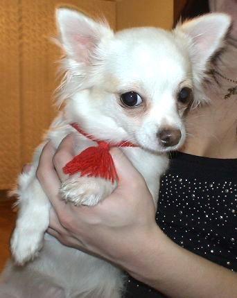 Красная нить для собаки