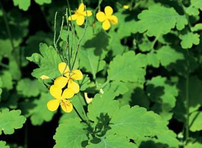 Пример использования растений