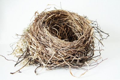 Как использовать птичье гнездо