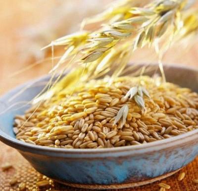 Зерна ячменя