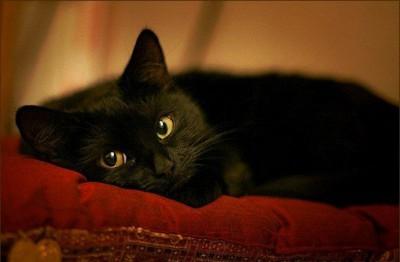 Кошка - защитник дома