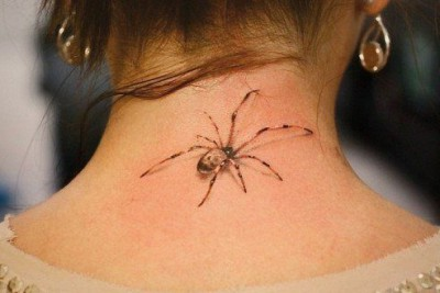Изображение паука
