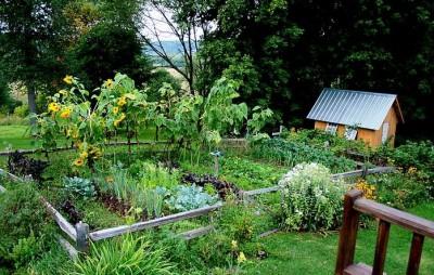 Как уберечь свой огород от негатива