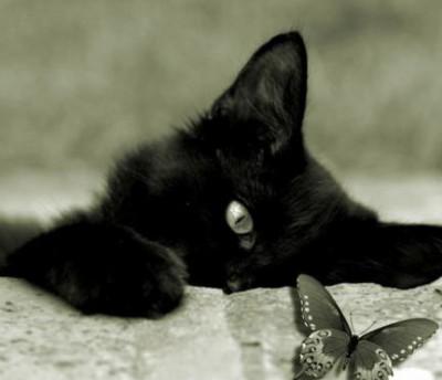 Кошка для защиты от нечести