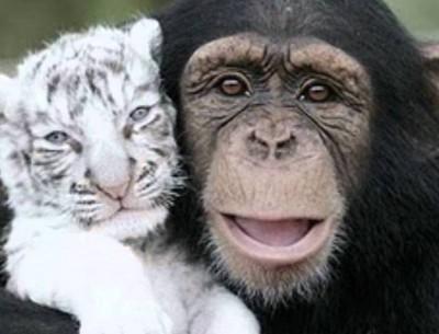Союз Обезьяны и Тигра