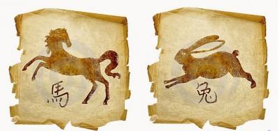 Кот и Лошадь в совместной жизни