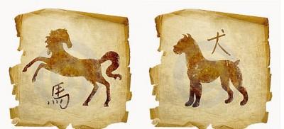 Отношения Лошади и Собаки
