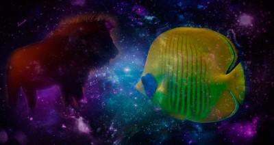 Лев и Рыбы в любви