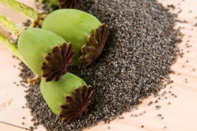 Маковые семяна
