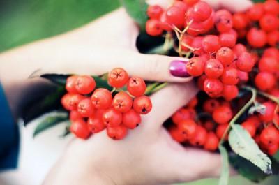 Сбор ягод для оберега
