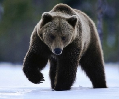 Медведь для славян