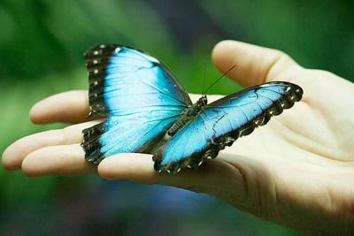 Приметы о бабочках