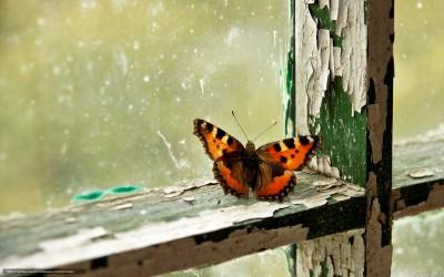 Бабочка зимой