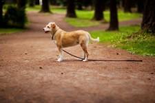 Если потерялась собака
