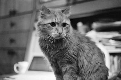 Внезапная смерть кошки