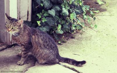 Кошка приблудилась