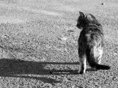 Кот ушел из дому