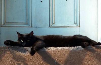 Кошка на пороге