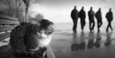 Причины ухода кота