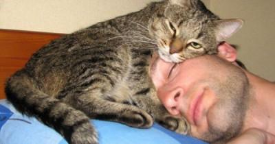 Кошка в голове