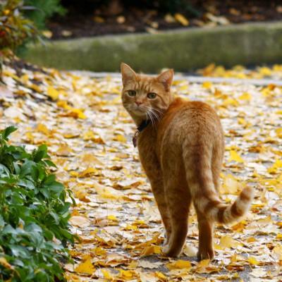 Кот уходит из дома