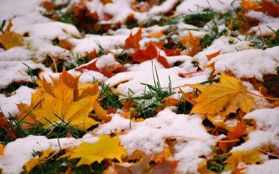 Погода в ноябре