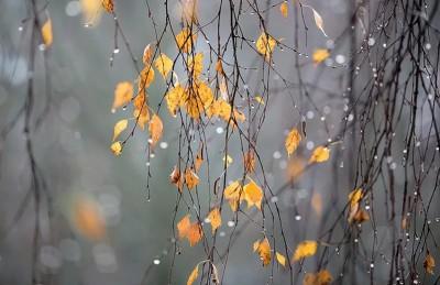 Деревья без листвы
