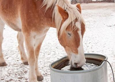 Пили лошадей
