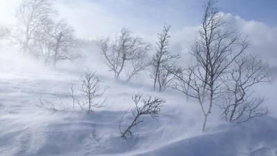 Ветер со снегом - долгой зиме
