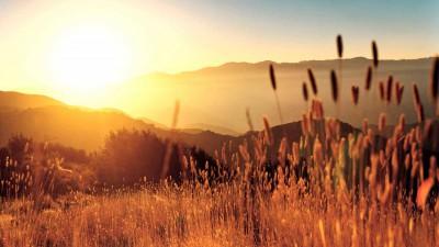 Жара и яркое солнце - к хорошим зерновым